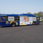 Delhi Hoho buses. LIC Ads